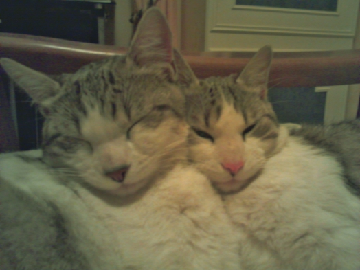 Grosminet avec son frère Garfield.