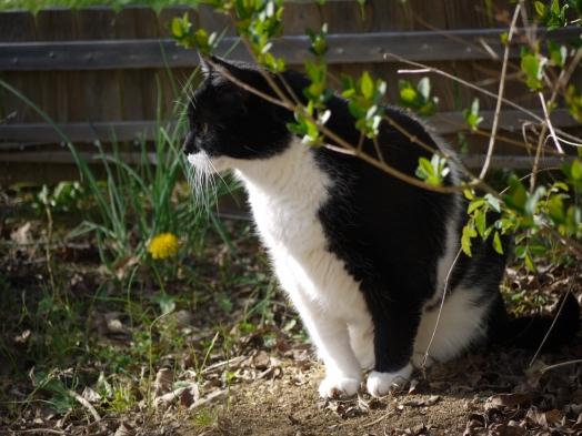 mouchkine dans son jardin