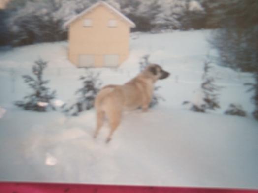 Dans la neige comme je l'aimais!!!!
