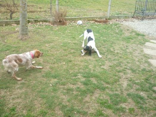 Daisy et Enox