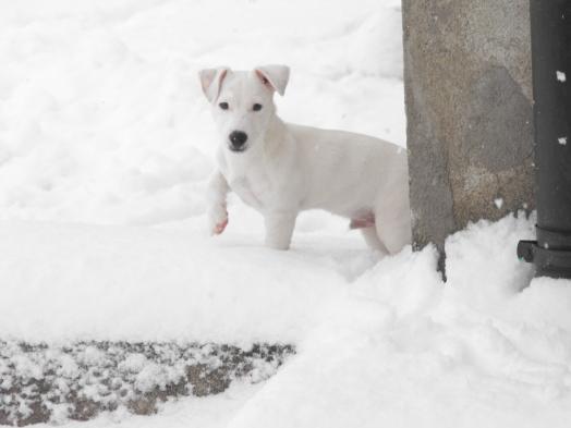 Vous avez vu, on ne me voit plus dans la neige !!!