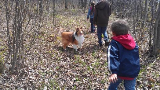 Aujourd'hui, promenade en forêt!