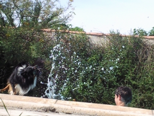 Grrr va l'attraper cette eau !!