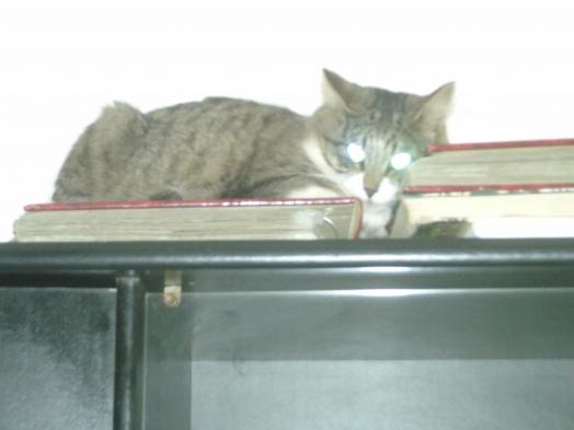 j'aime dormir sur l'armoire