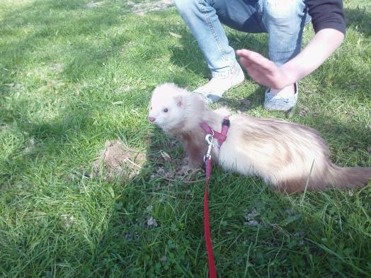 wally au parc