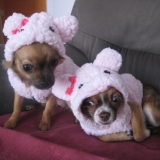 Callie & Gipsy