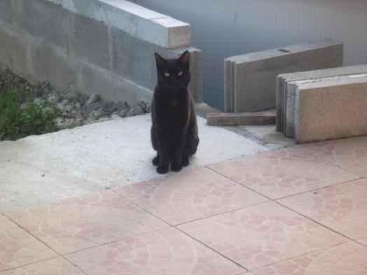 Ah t'es rentré et deja tu me prends en photo !!