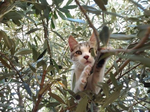 Grosmi dans les arbres.