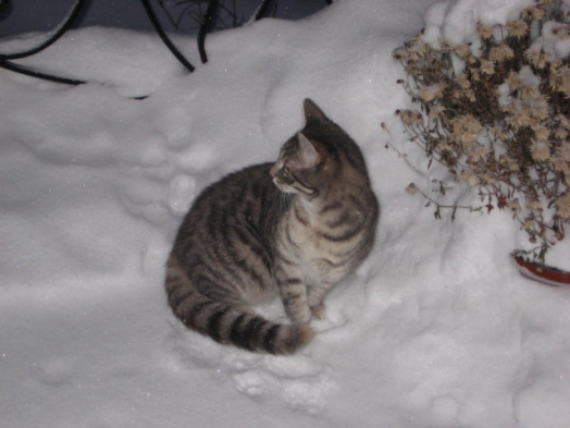 ♥ ♥ snow