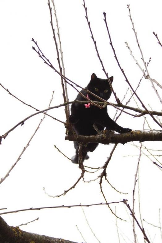 ballade dans mon arbre