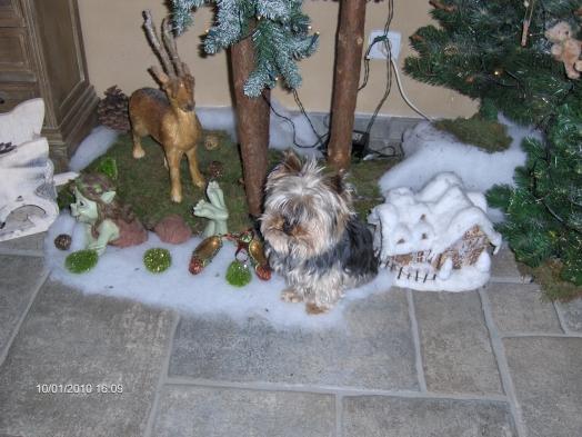 titou dans la forêt de Noël