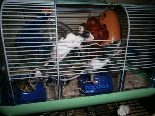 notre nouvelle cage champignion ♥