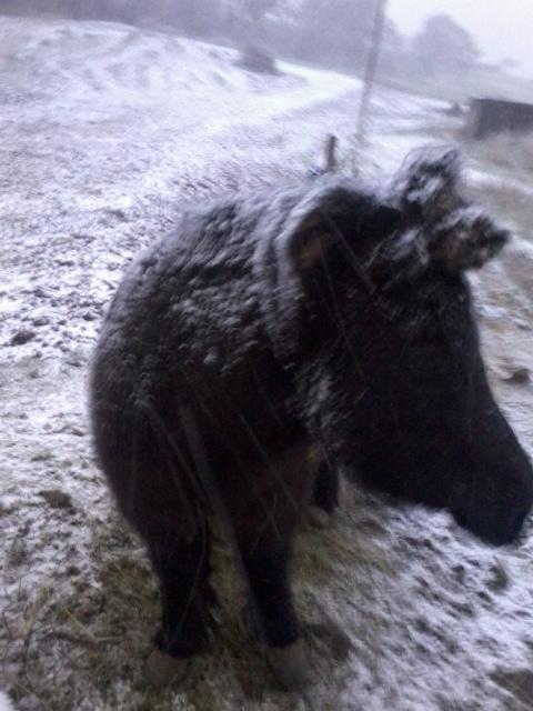 vive la neige!