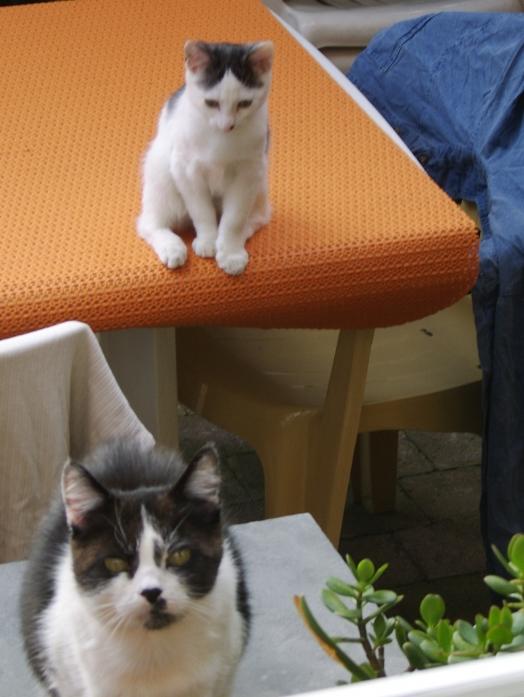 Bébé avec maman chat ;o)))))