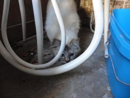 Je suis bien cachée !