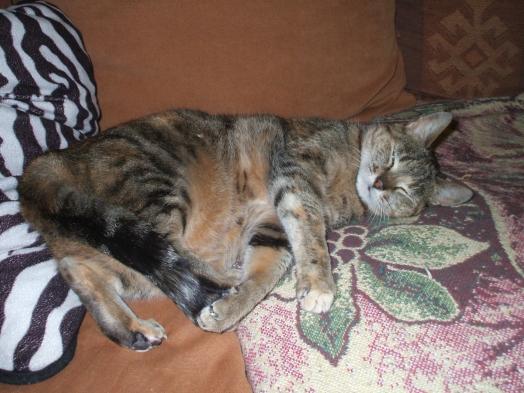 C'est le top une petite sieste sur le canapés!