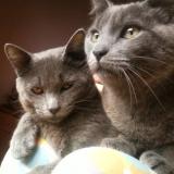 Gandalf  &  Aimar
