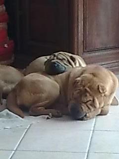 Dana qui dort avec démone sur son dos
