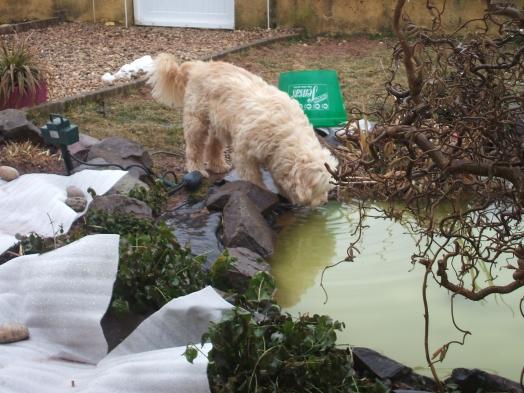 La je bois dans le bassin!!!