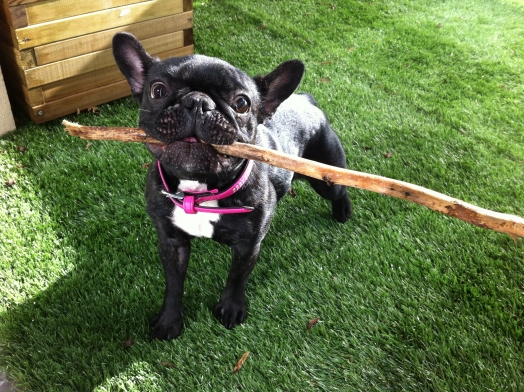 Il est beau mon bâton !!!