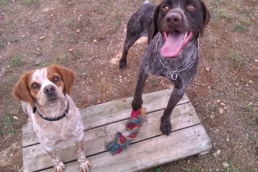 Daisy et Even