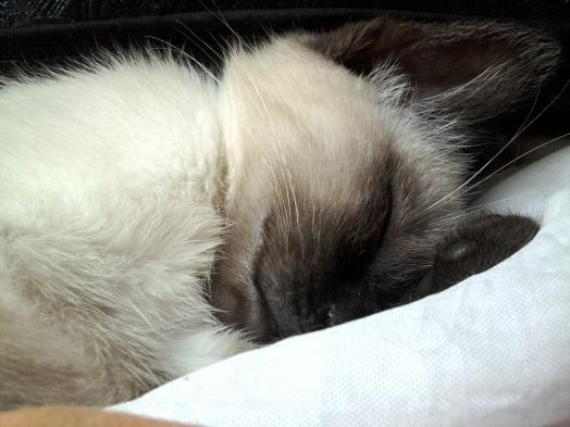 le sommeil, ça se respecte!!!