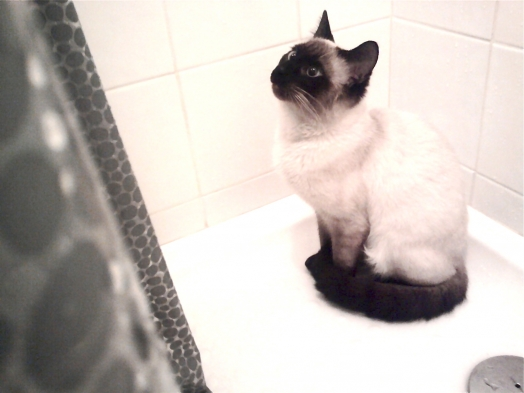 Moi j'y vais tout seul sous la douche!