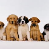 La Team Des Baby Dogs