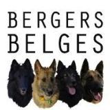 TEAM DES BEAUX BERGERS BELGES