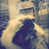 ♥Chipie♥