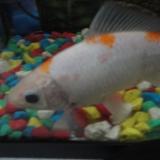Nemo Ƹ̵̡Ӝ̵̨̄Ʒ