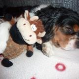 Snoopy :-)