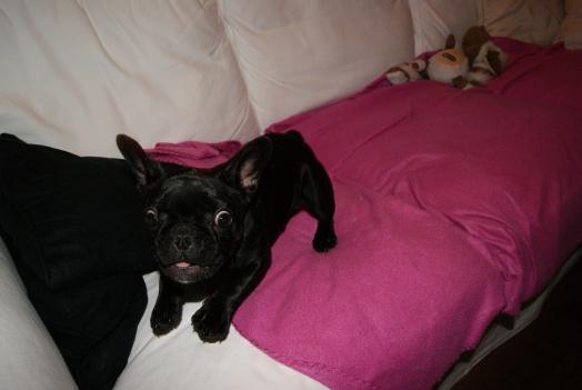 C'est mon canapé.