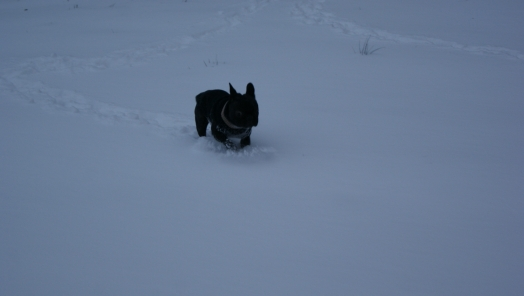 J'adore la neige !!!