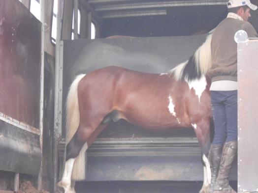 """les plus beau chevaux """"snoopy """""""