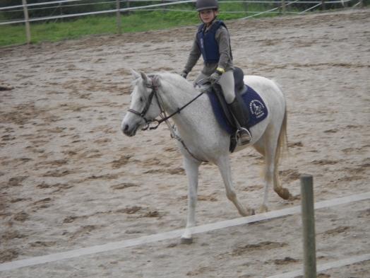 """les plus beaux chevaux """"Hifrane"""""""
