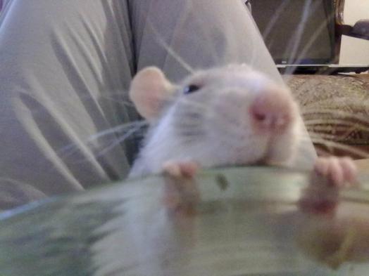 Mamoune, ya quoi dans ton assiette ?!