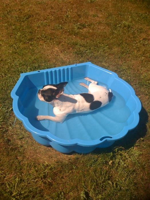 C'est bon l'été dans ma piscine !