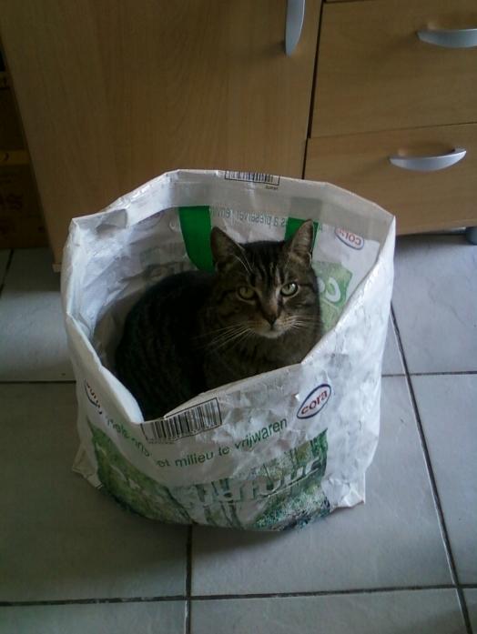 J'aime m'installer dans les sacs...