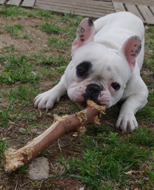 Tu veux jouet avec moi ?
