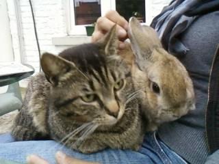 Avec p'tit frère Bunny