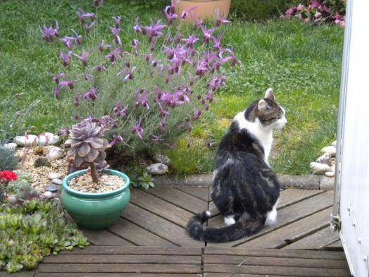 Je surveille le jardin