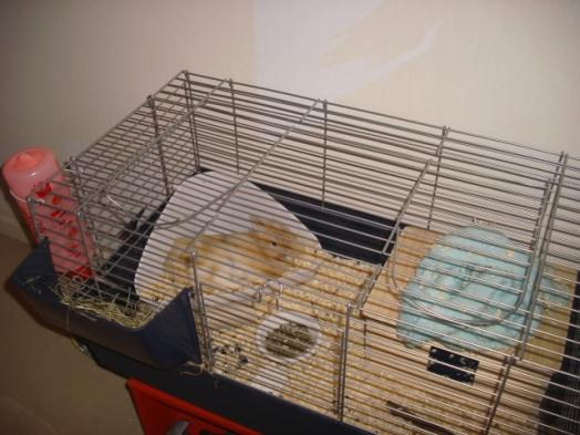 Mon ancienne cage quand j'étais petite