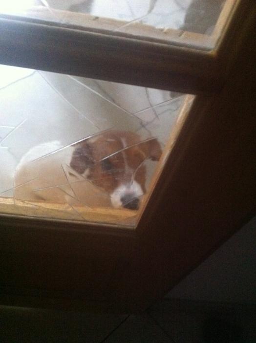 J'ai fait dodo toute la nuit et j'attends impatiement que maman m'ouvre la porte pour que je puisse lui faire la fête !