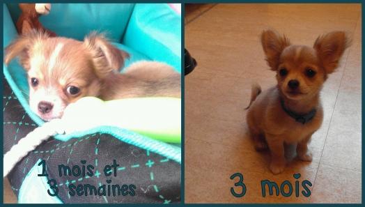 Me voici à 1 mois et 3 semaines ( photo de gauche ) et maintenant a 3 mois ( photo de droite )