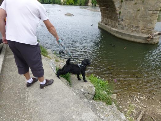 A Limoux il y a des canards...