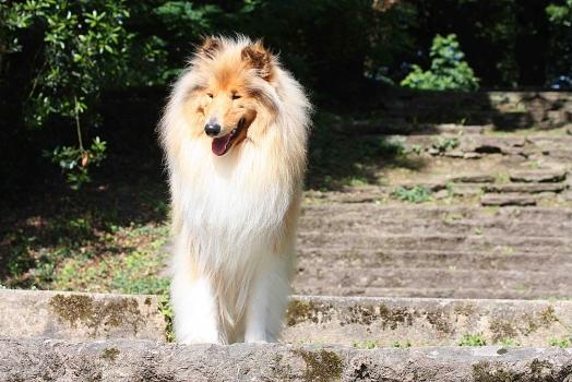 Le Roi Lion, c'était lui...
