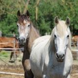La team des plus beaux chevaux