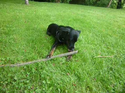 J'ai très petit et un très gros bâton :)