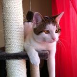 Les chats de Gouttière